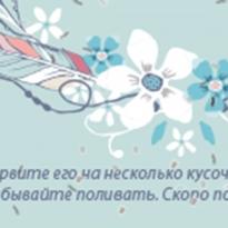 """Приглашение на свадьбу """"Ловец снов"""""""